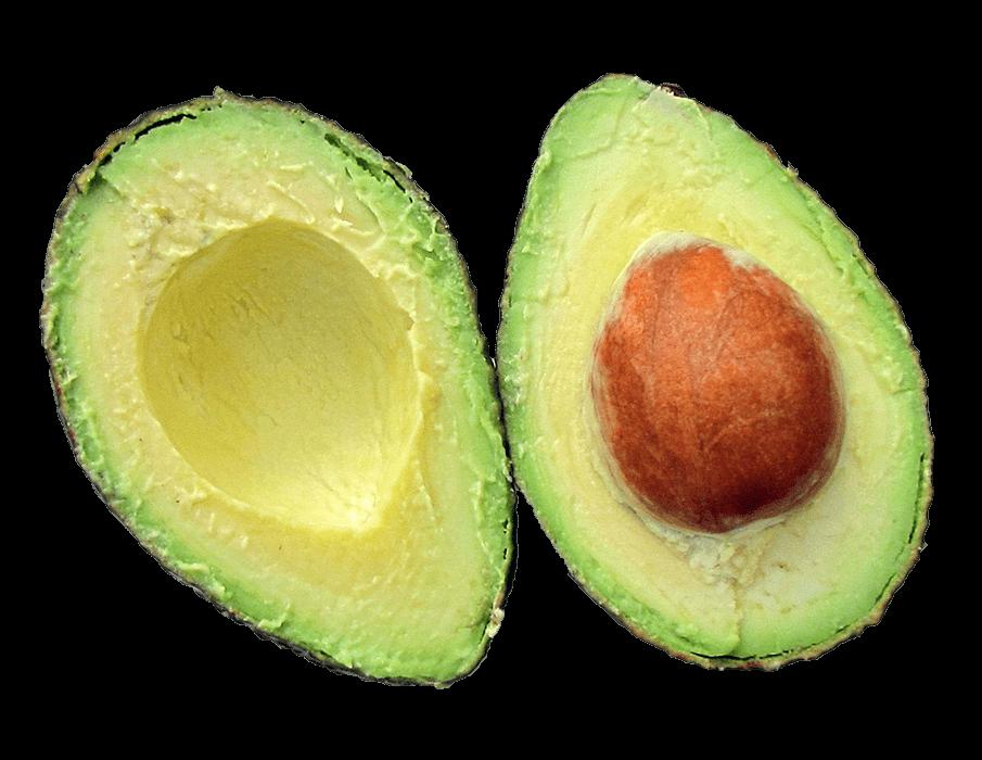 Je eigen avocadoboom planten? Het is geen sprookje!