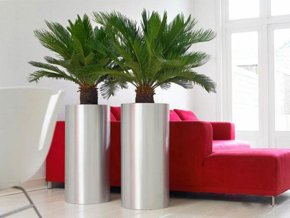 Hoge plantenpot binnenshuis: de do's en de don'ts