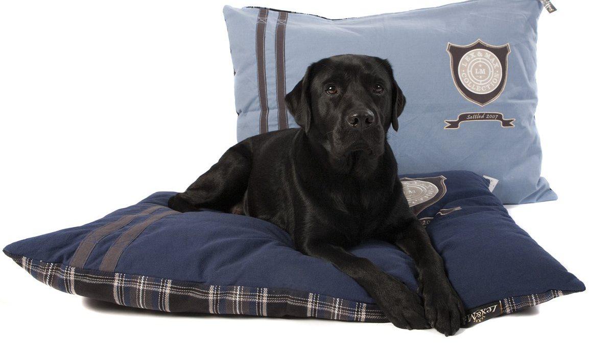 Misschien wel het nieuwe bed van jouw hond?