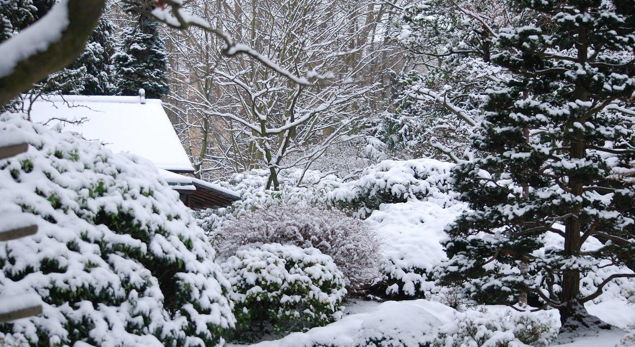 5 tips voor het winterklaar maken van je tuin