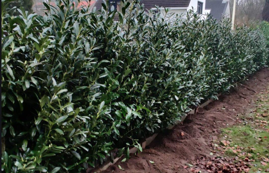 Creëer meer privacy met een mooie groene haag in de tuin