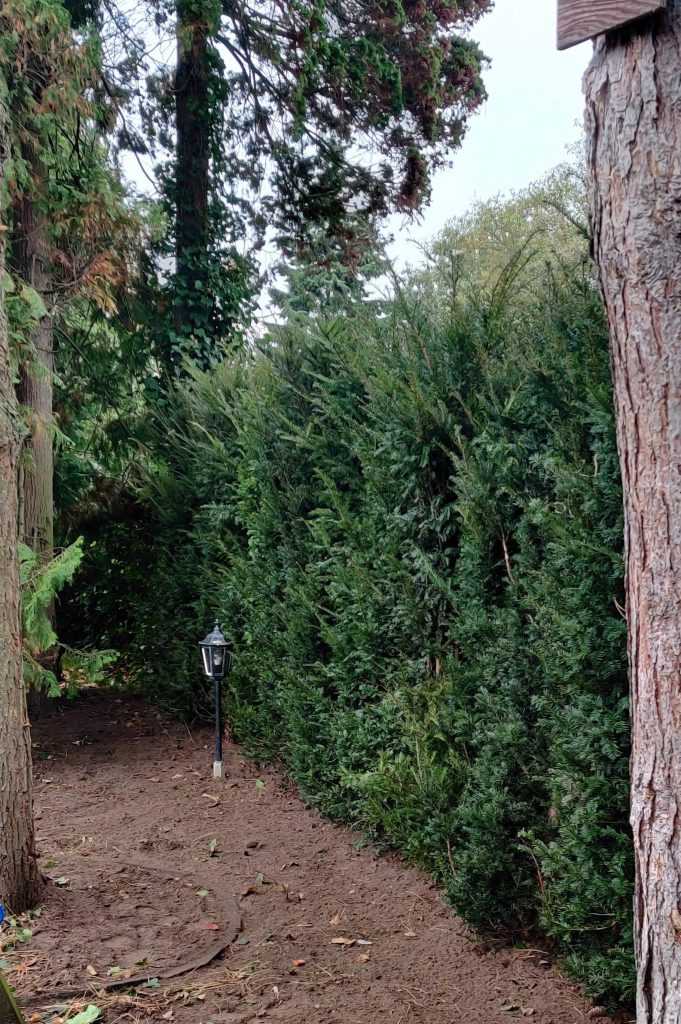 Meer privacy in eigen tuin
